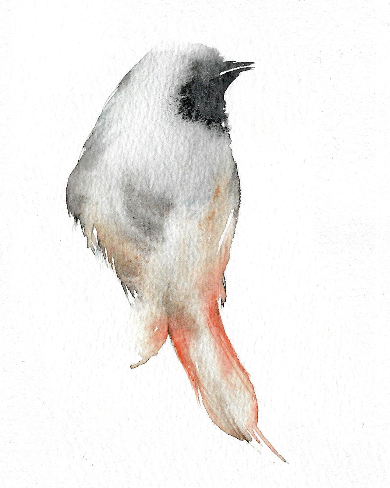 Top Silvia Molinari crea, in pochi istanti, illustrazioni  JU63