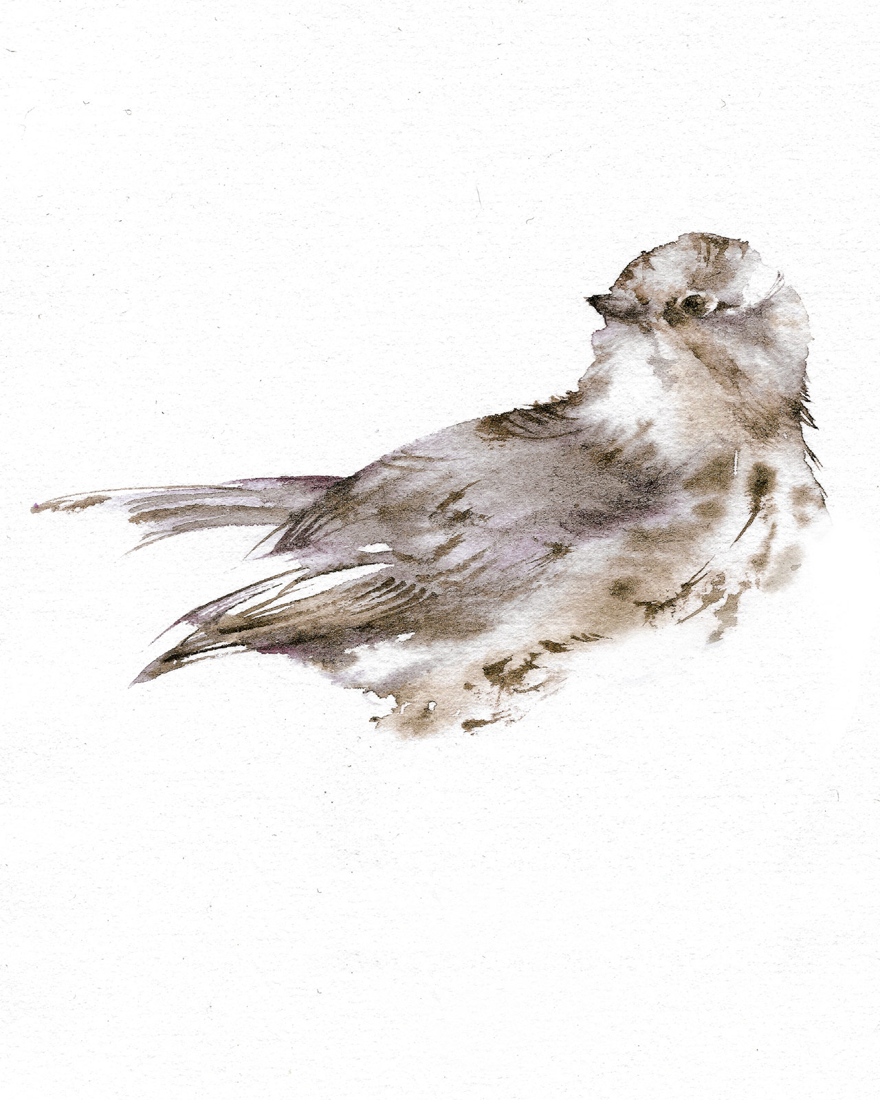 Favoloso Silvia Molinari crea, in pochi istanti, illustrazioni  PE73